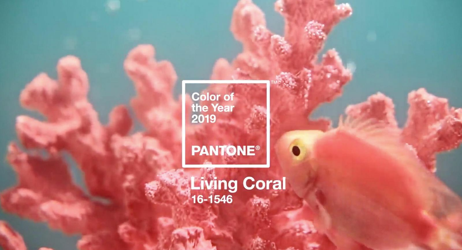 Pantone 2019: 'Living Coral' named Colour of the Year