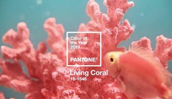 S1x1 banner pantone livingcoral 3x2