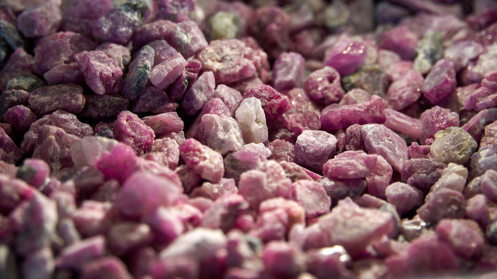 A selection of the Greenlandic Aappaluttoq mine rubies